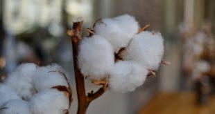 materiál bavlna
