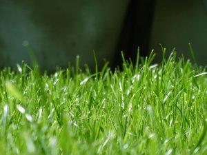 čištění skvrn od trávy